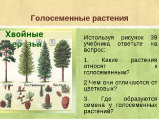 Голосеменные растения Используя рисунок 39 учебника ответьте на вопрос: 1. Ка