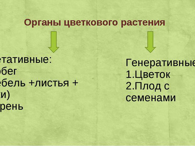 Органы цветкового растения Вегетативные: 1.Побег ( стебель +листья + почки) 2...