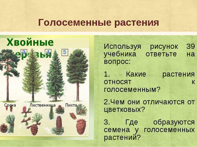 Голосеменные растения Используя рисунок 39 учебника ответьте на вопрос: 1. Ка...