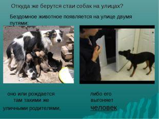 Откуда же берутся стаи собак на улицах? Бездомное животное появляется на ули