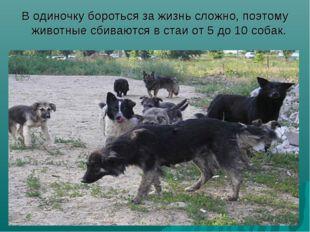В одиночку бороться за жизнь сложно, поэтому животные сбиваются в стаи от 5 д