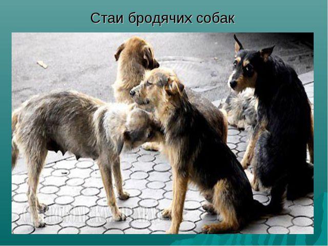 Стаи бродячих собак