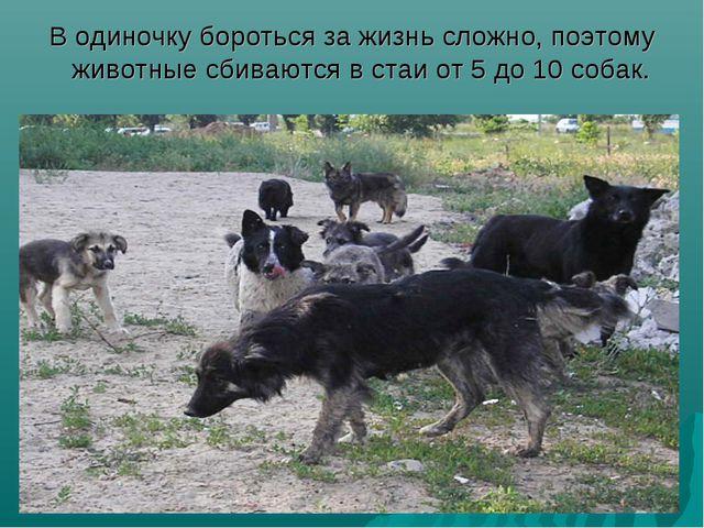 В одиночку бороться за жизнь сложно, поэтому животные сбиваются в стаи от 5 д...
