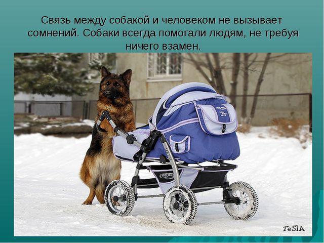 Связь между собакой и человеком не вызывает сомнений. Собаки всегда помогали...