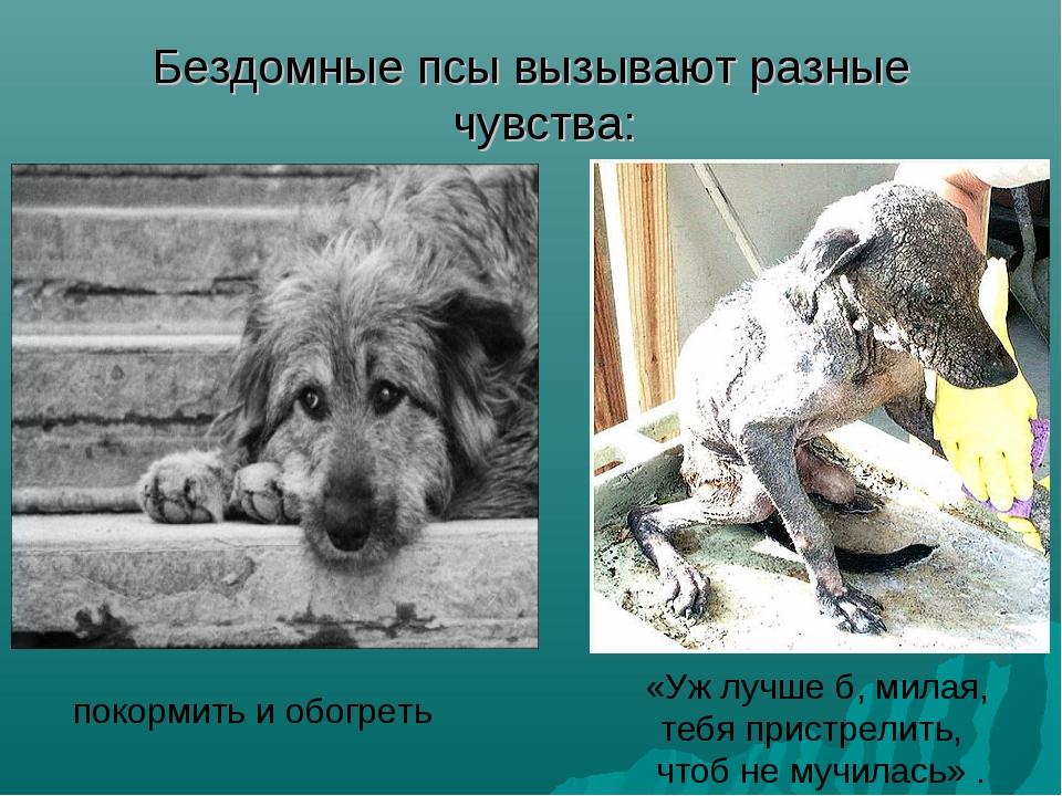 Бездомные псы вызывают разные чувства: покормить и обогреть «Уж лучше б, мила...