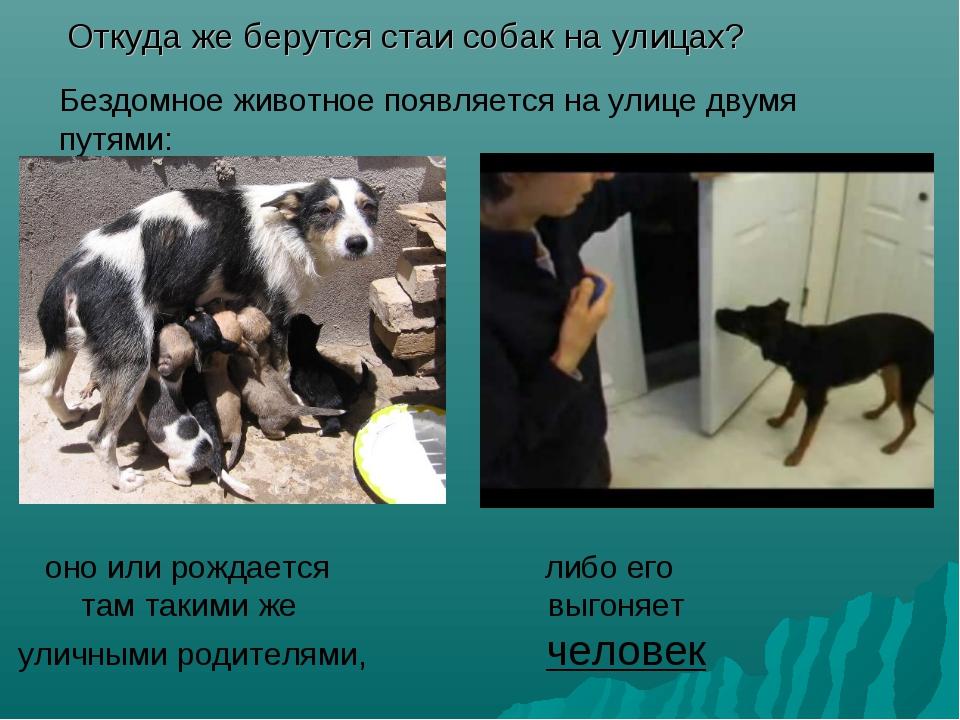 Откуда же берутся стаи собак на улицах? Бездомное животное появляется на ули...