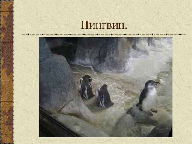 Пингвин.