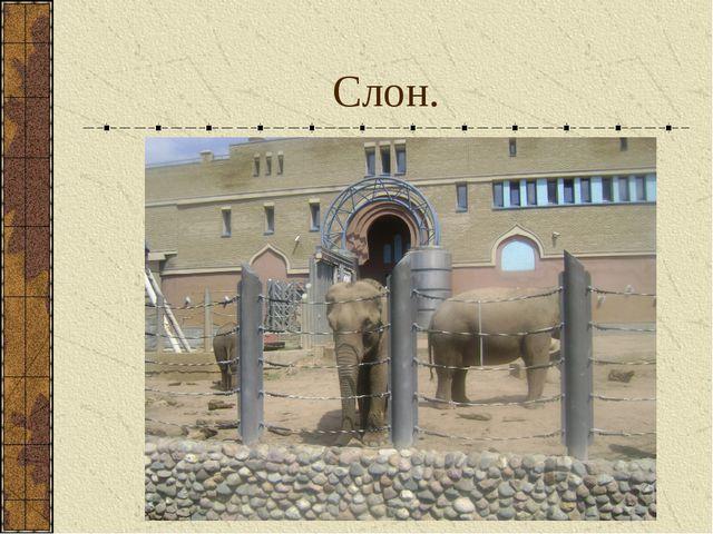 Слон.
