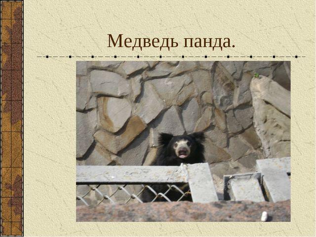 Медведь панда.