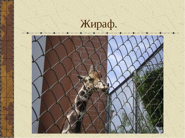 Жираф.