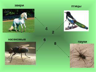 4 2 6 8 звери насекомые птицы пауки