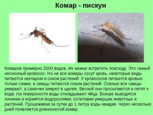 Комар - пискун Комаров примерно 2000 видов. Их можно встретить повсюду. Это с