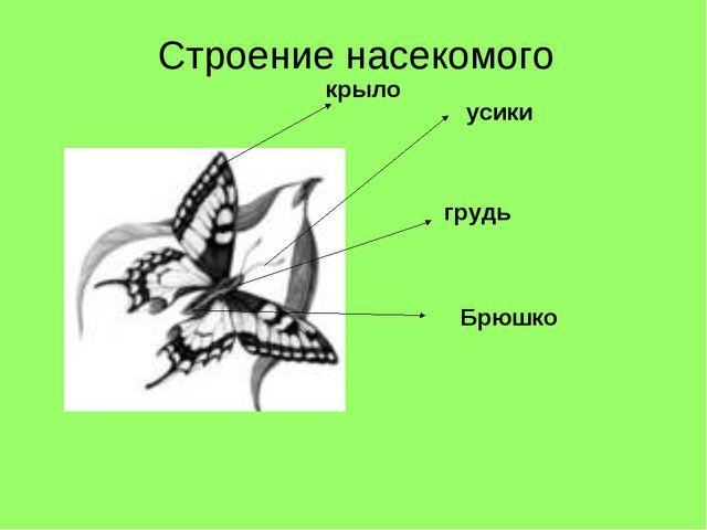 усики Брюшко крыло грудь Строение насекомого