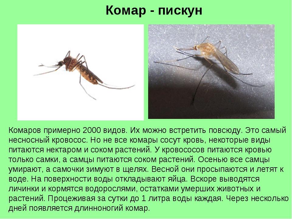 Комар - пискун Комаров примерно 2000 видов. Их можно встретить повсюду. Это с...