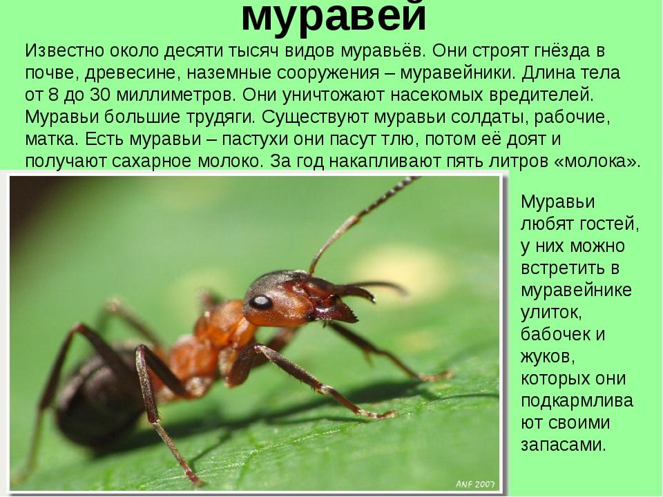 муравей Известно около десяти тысяч видов муравьёв. Они строят гнёзда в почве...