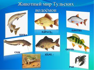 Животный мир Тульских водоёмов ПЛОТВА ОКУНЬ КАРАСЬ ЩУКА СОМ КАРП РАК