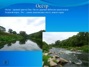 Осётр Осётр – правый приток Оки. Около деревни Бебихово расположен большой по