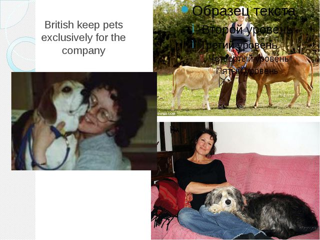 British keep pets exclusively for the company