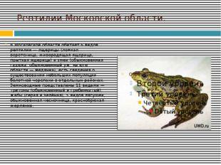 Рептилии Московской области. В Московской области обитает 6 видов рептилий —