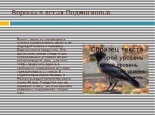 Вороны в лесах Подмосковья. Ворон - редко встречающаяся птица в подмосковных