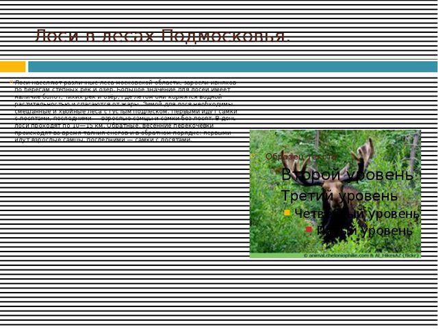 Лоси в лесах Подмосковья. Лоси населяют различные леса московской области, за...