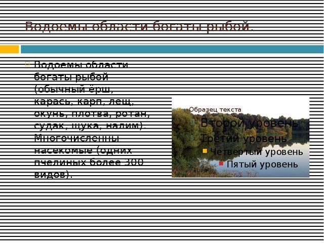 Водоемы области богаты рыбой. Водоёмы области богаты рыбой (обычный ёрш, кара...