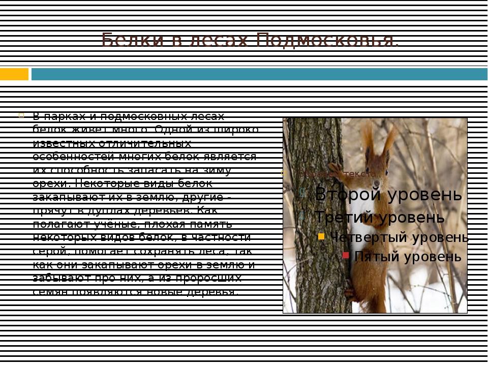 Белки в лесах Подмосковья. В парках и подмосковных лесах белок живет много. О...