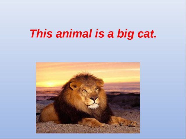 This animal is a big cat.