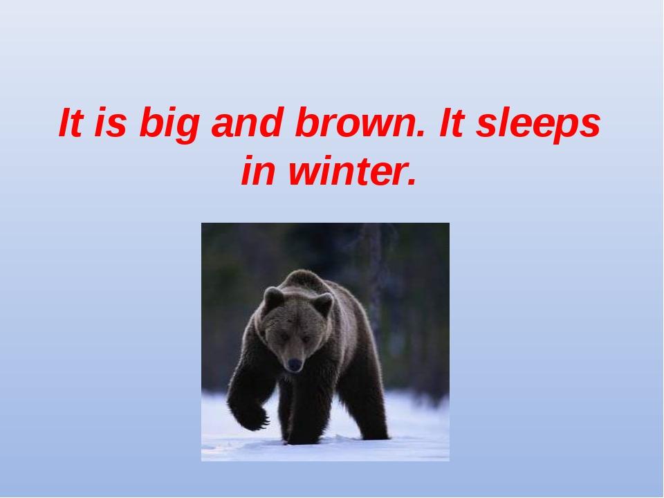 It is big and brown. It sleeps in winter.
