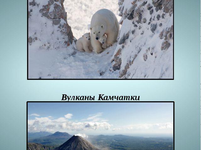 ПК заповедника «Остров Врангеля» Вулканы Камчатки