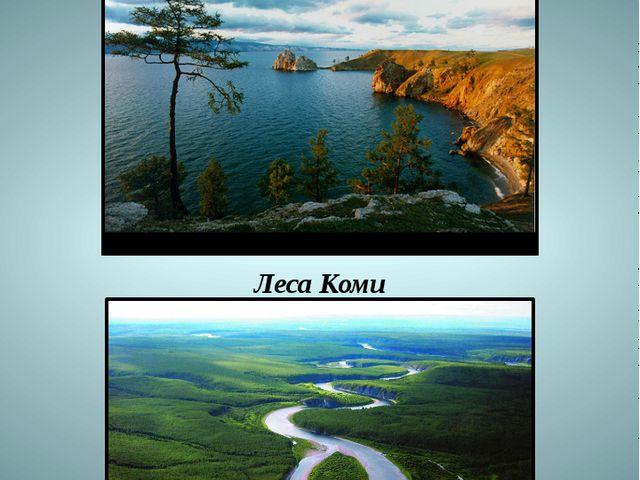 Озеро Байкал Леса Коми