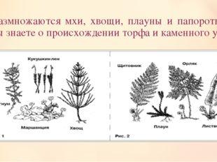 Как размножаются мхи, хвощи, плауны и папоротники? Что вы знаете о происхожде