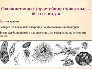 Одноклеточные (простейшие) животные – 60 тыс. видов 1. Это эукариоты 2.Размер