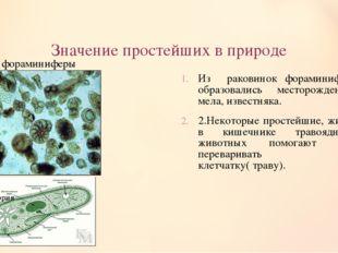 Значение простейших в природе Из раковинок фораминифер образовались месторожд