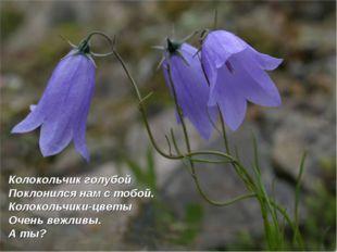 Колокольчик голубой Поклонился нам с тобой. Колокольчики-цветы Очень вежливы.
