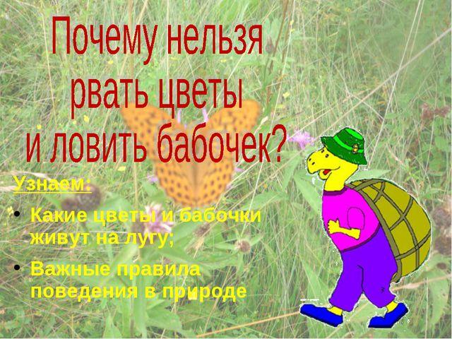 Узнаем: Какие цветы и бабочки живут на лугу; Важные правила поведения в природе