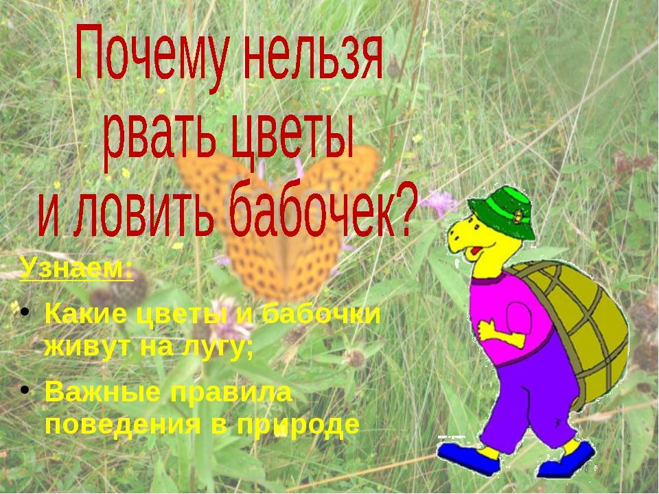 почему нельзя рвать цветы в лесах и ловить бабочек