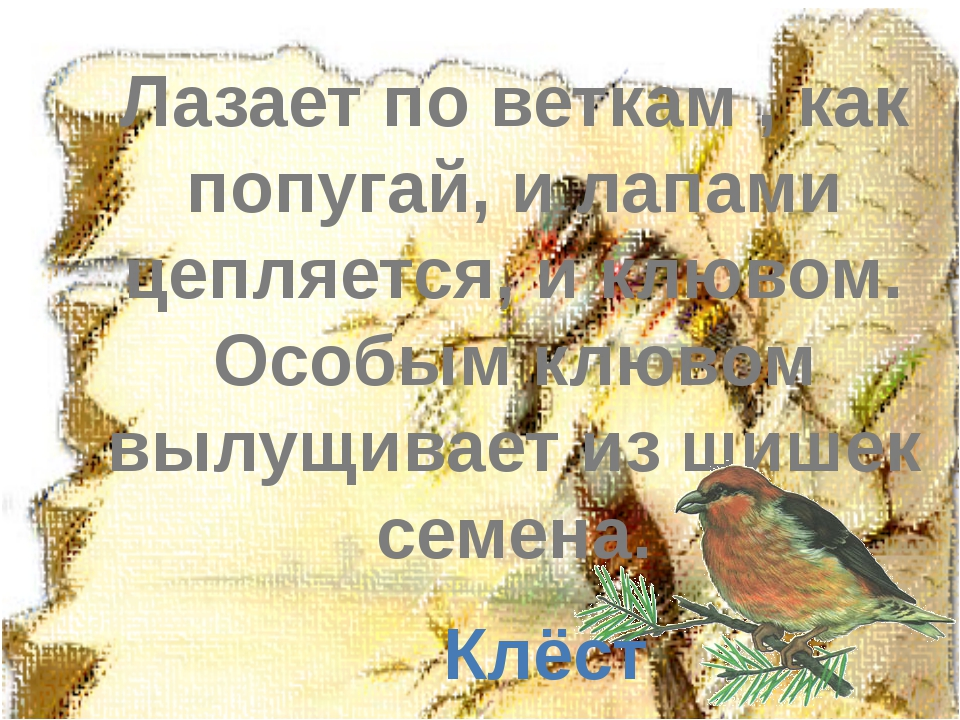 Лазает по веткам , как попугай, и лапами цепляется, и клювом. Особым клювом в...
