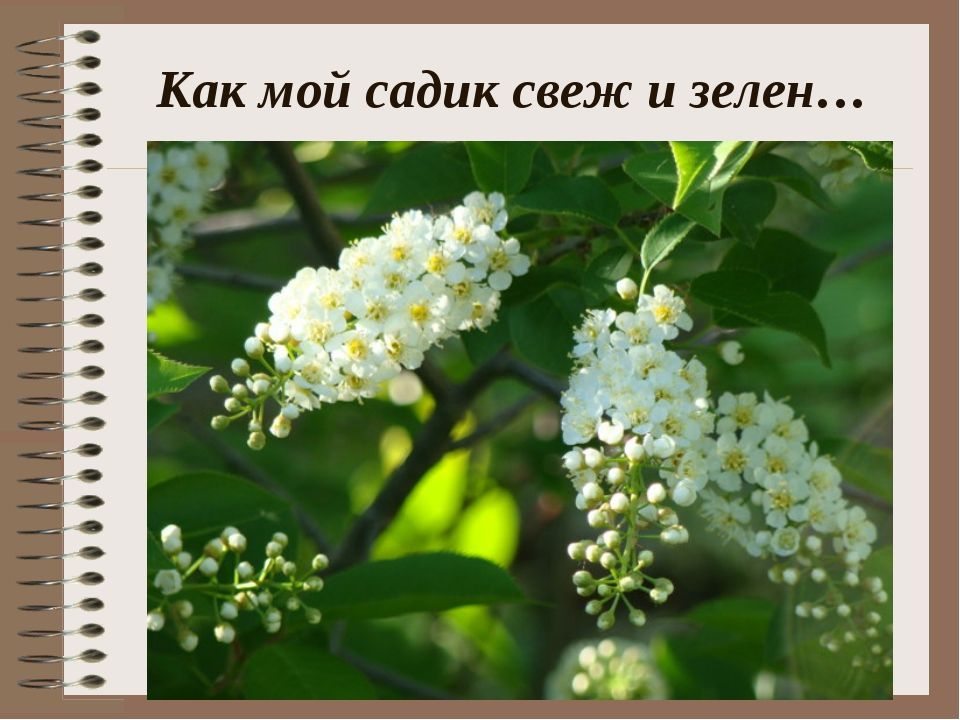 Как мой садик свеж и зелен…