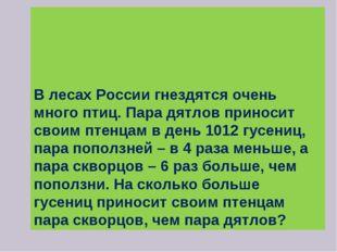 В лесах России гнездятся очень много птиц. Пара дятлов приносит своим птенца