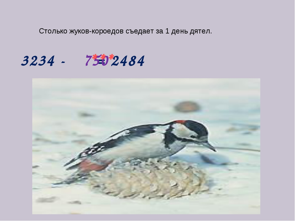 3234 - = 2484 750 *** Столько жуков-короедов съедает за 1 день дятел.