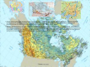 Общие запасы древесины промышленных лесов в Канаде    исчисляются в 20 млрд.
