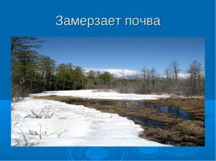 Замерзает почва