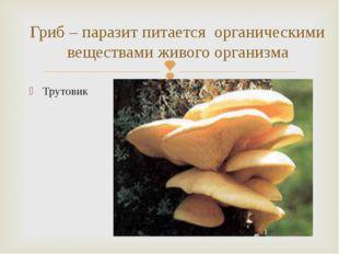 Трутовик Гриб – паразит питается органическими веществами живого организма