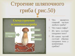 Строение шляпочного гриба ( рис.50) Что является главной частью любого гриба?