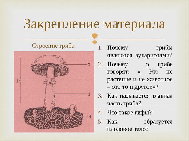 Закрепление материала Строение гриба Почему грибы являются эукариотами? Почем...