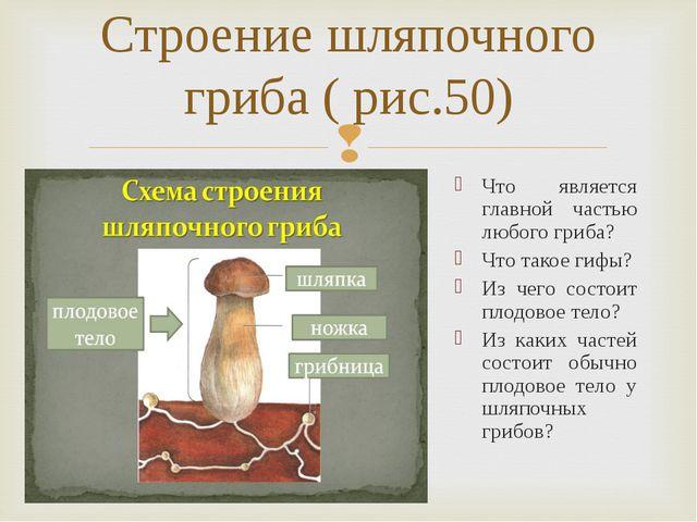 Строение шляпочного гриба ( рис.50) Что является главной частью любого гриба?...