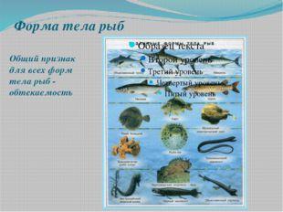 Форма тела рыб Общий признак для всех форм тела рыб - обтекаемость Общий приз