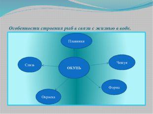 Особенности строения рыб в связи с жизнью в воде. ОКУНЬ Чешуя Плавники Форма