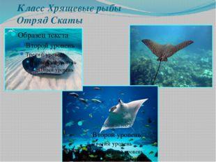 Класс Хрящевые рыбы Отряд Скаты